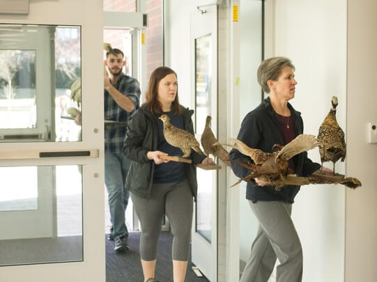 Students carry in taxidermied animals when moving in the building.